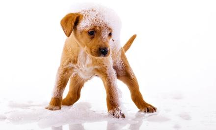 Peluquería canina: lavado, corte de pelo y uñas y limpieza de oídos, ojos y almohadillas desde 9,90 € en Zoone Pet Shop