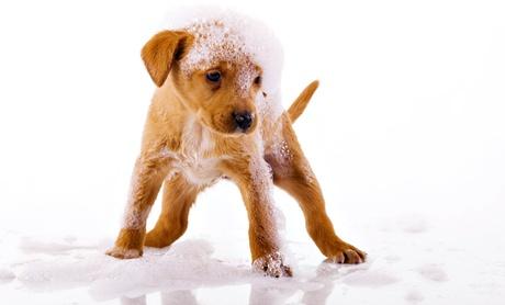 Sesión de peluquería para perros hasta 40 kg desde 9,90 € y con corte desde 14,90 €