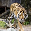 Heritage Park Zoological Sanctuary – Up to 50%  Off Wildlights