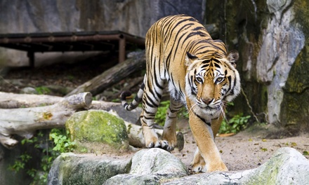 Up to 40% Off Membership for Admission at Jackson Zoo