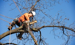 Stumped Tree Grinding and Removal: $69 for $200 Worth of Tree Removal or Stump Grinding from Stumped