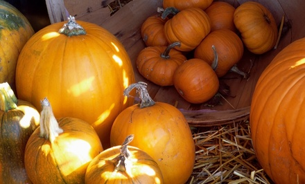 Hayride, Petting Zoo, and Pumpkin Picking for Four, Six, or Eight at The Hunter Farm (Up to 47% Off)