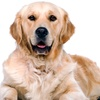 Up to 61% Off Doggie Daycare at Doggin-It Daycare