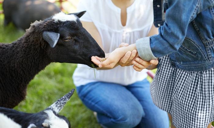 Redmond Petting Farm - Tashunka: Petting Farm Visit with Optional Pony Rides for Four, Six, or Eight at Redmond Petting Farm (Up to 60% Off)