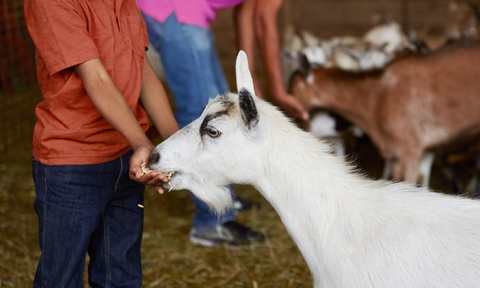 Grisham Farms - McKinney: Family Visit for Up to 10 or General Admission for 2 or 4 at Grisham Farms (Up to 42% Off)