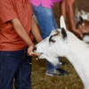 Up to 42% Off Petting Zoo Admission