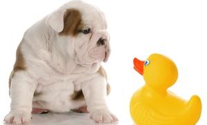 Snob Dog: Una o 3 toelettature per cani (sconto fino a 79%)