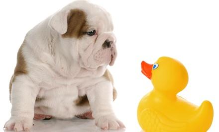 Sesión de peluquería para perros con o sin corte desde 9,95 € en 3 centros Lovedogs