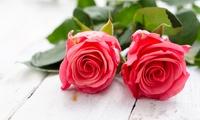 10 oder 20 frische Schnittrosen mit einer Stiellänge von 35 cm bei Blumeneck (bis zu 51% sparen*)