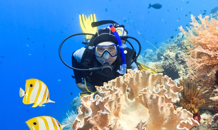 Adventure Diving - Crystal River - Royal Highlands: $99 for One Three-Hour Discover Scuba Course at Adventure Diving Crystal River ($199 Value)