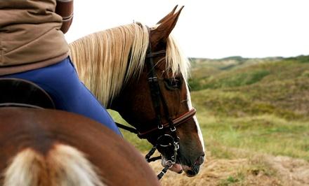 1 o 3 meses de equitación en grupos reducidos