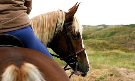 Up to 34% Off on Horse Back Riding - Training at Turning Point Pastures