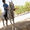 Clases de equitación por 29,95 €