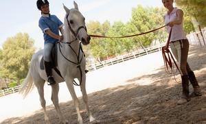 Villa de Córdoba Cursos: 1 o 3 meses de clases de equitación desde 29,95 €