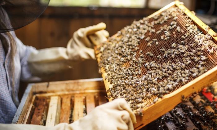 Girl Next Door Honey - San Diego: Walk Through a Honeybee Hive with a Local Beekeeping Expert
