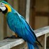 Bilety wstępu do papugarni