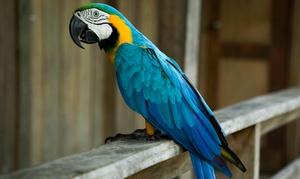 Papugolandia: Od 21,99 zł: bilety normalne lub rodzinne do Papugolandii (do -33%)