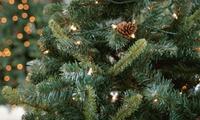 Nordmann- oder Edeltanne in der Größe nach Wahl zwischen 1 m und 1,90 m vom Weihnachtsbaum-Guru (bis zu 34% sparen*)