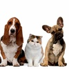 50% Off Pet Care Packages
