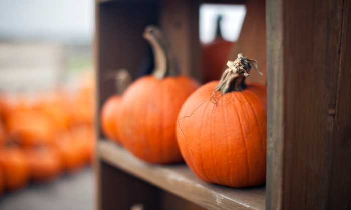 Freedom Farms - Valencia: Admission for Two, Four, or Six to the Freedom Farms Fall Festival on October 18, 19, 25, or 26 ( 50% Off)