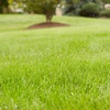 50% Off Organic Lawn Fertilization with Weed Control