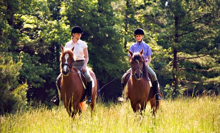 $59 for Four 60-Minute Introductory Group Horseback-Riding Lessons at Equestrian Arts ($140 Value)
