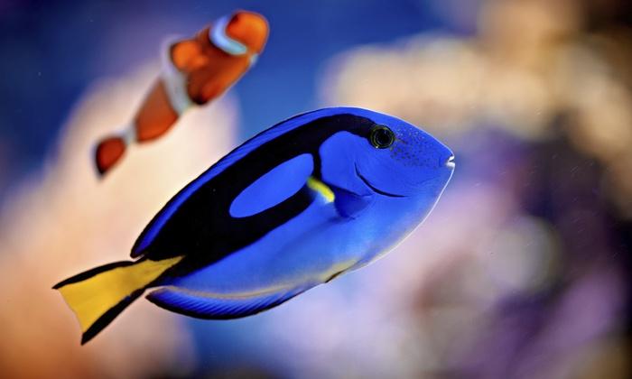 Aquarium-Mart - Miami: Aquarium Cleaning for Up to 50- or 200-Gallon Tank from Aquarium-Mart (Up to 51% Off)