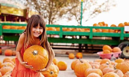 Pumpkin Picking Patch