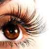 51% Off at The Lash Lounge