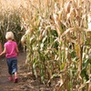 Up to 52% Off Corn Maze and Fall Activities