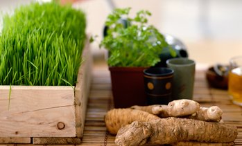 Up to 90% Off Advanced Master Herbalist Diploma Course