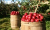 George Hill Orchards - Lancaster: $18 for Apple or Peach Picking for Up to Five at George Hill Orchards (Up to $30 Value)