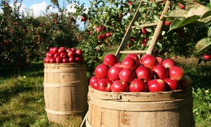 B.J Reece Orchards: Fall Fun Package for One, Two, or Four at B.J Reece Orchards (Up to 51% Off)