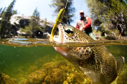 Half- or Full-Day Fly-Fishing Trip for Up to Two from Sierra Fly Fishing Adventures (Up to 54% Off)