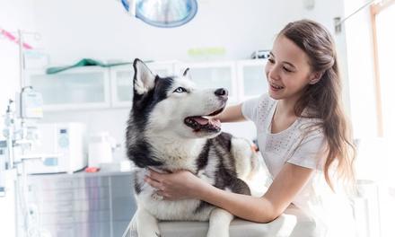 Chequeo y vacunación para perro o gato desde 19,95 € en Centro Veterinario Yorki