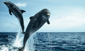 Dolphin Quest: 90-Minute Dolphin Sightseeing Cruise for Two or Four by Dolphin Quest (Up to 46% Off)