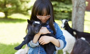 Doodle and Boo Petting Zoo & Aviary LLC: Admission for Two, Four, or Six, or a Party for 10 at Doodle and Boo Petting Zoo & Aviary LLC (Up to 52% Off)