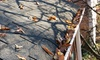 Tiger Building Service: One Gutter Cleaning for a One or Two Story House from Tiger Building Service (Up to 51% Off)