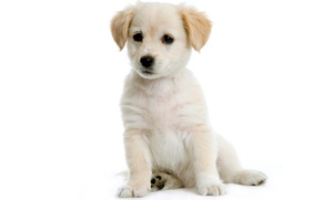 The Pet's Play Palace: $19 for a Spa Bath Package for a Dog at The Pet's Play Palace ($45 Value)
