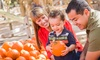 Flamingo Road Nursery-Fall Festival - Flamingo Groves: Fall Experience Package for Two or Four at Flamingo Road Nursery's Fall Festival  (33% Off)