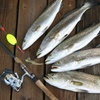 Up to 48% Off Fishing Trip at Jenkins Guiding Service