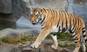 Tiger Experience: Tiger Exclusive: visita privata con full immersion nel mondo dell'addestramento dei felini al parco Tiger Experience