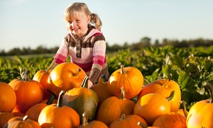 Owl Creek Pumpkin Patch: Fall-Themed Farm Visit for Two, Four, or Six with Hay Maze and Pumpkin Painting at Owl Creek Pumpkin Patch (Up to 56% Off)