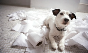 B4Schools: $55 for One Case of Toilet Paper Rolls - Standard (96 Rolls) ($87 Value) — B4Schools