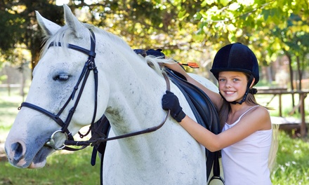 Guided Horseback Trail Ride for Two or Private Introductory Lesson at Hidden Hills Farm & Saddle Club (Up to Half Off)