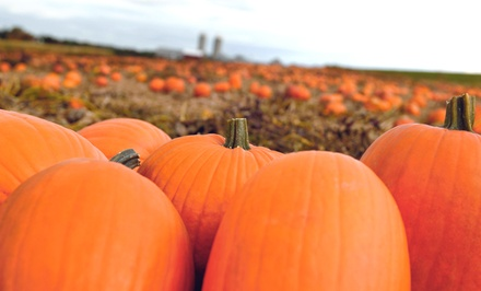 Pumpkin-Patch Visit for Two or Four at Scott Pumpkin Patch (Up to 50% Off)