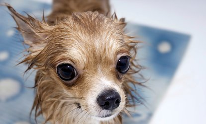 One Bathing Package for Small, Medium, or Large Dog at Looking Good <strong>Pet</strong> Spa (Up to 42% Off)