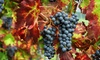 Up to 69% Off Winery Tour with Meal from Texas Winos