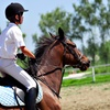 Up to 53% Off Horseback Riding Lessons