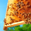 40% Off Introductory Beekeeping Class
